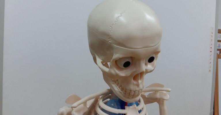 El esqueleto