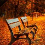El otoño en 2º de infantil