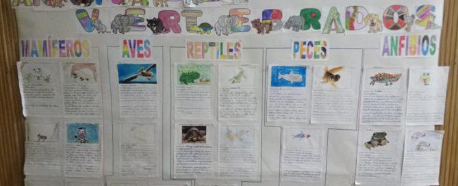 Poryecto sobre vertabrados en 3º de primaria del Colegio Rafaela María de Valladolid.