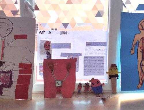 Trabajo cooperativo en 5º de primaria para realizar proyectos sobre el cuerpo humano