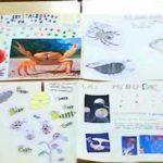 Los alumnos y alumnas de 3º de primaria del Colegio Rafaela María estudian los invertebrados.