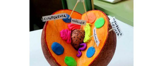 Los alumnos y alumnas del Colegio Rafaela María de Valladolid hacen maquetas de células animales y vegetales.