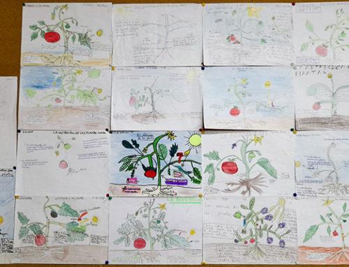 Dibujamos plantas, aprendemos sobre la fotosíntesis