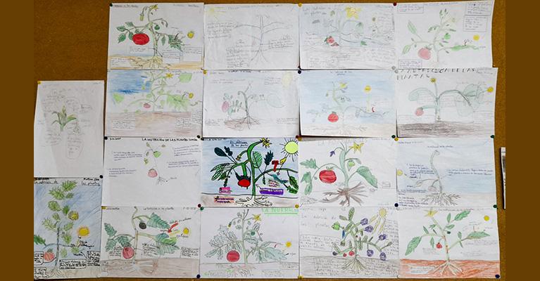 El alumnado de 4º de primaria del Colegio Rafaela María aprende el proceso de la fotosíntesis.