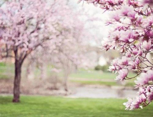 Ya llegó la primavera (Ambientes de aprendizaje).