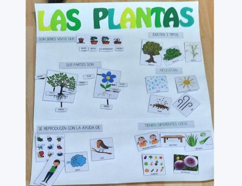 Fin ABP las plantas